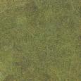MG01199