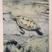Ningaloo Series Turtle